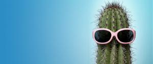 Cactus wearing sunglasses